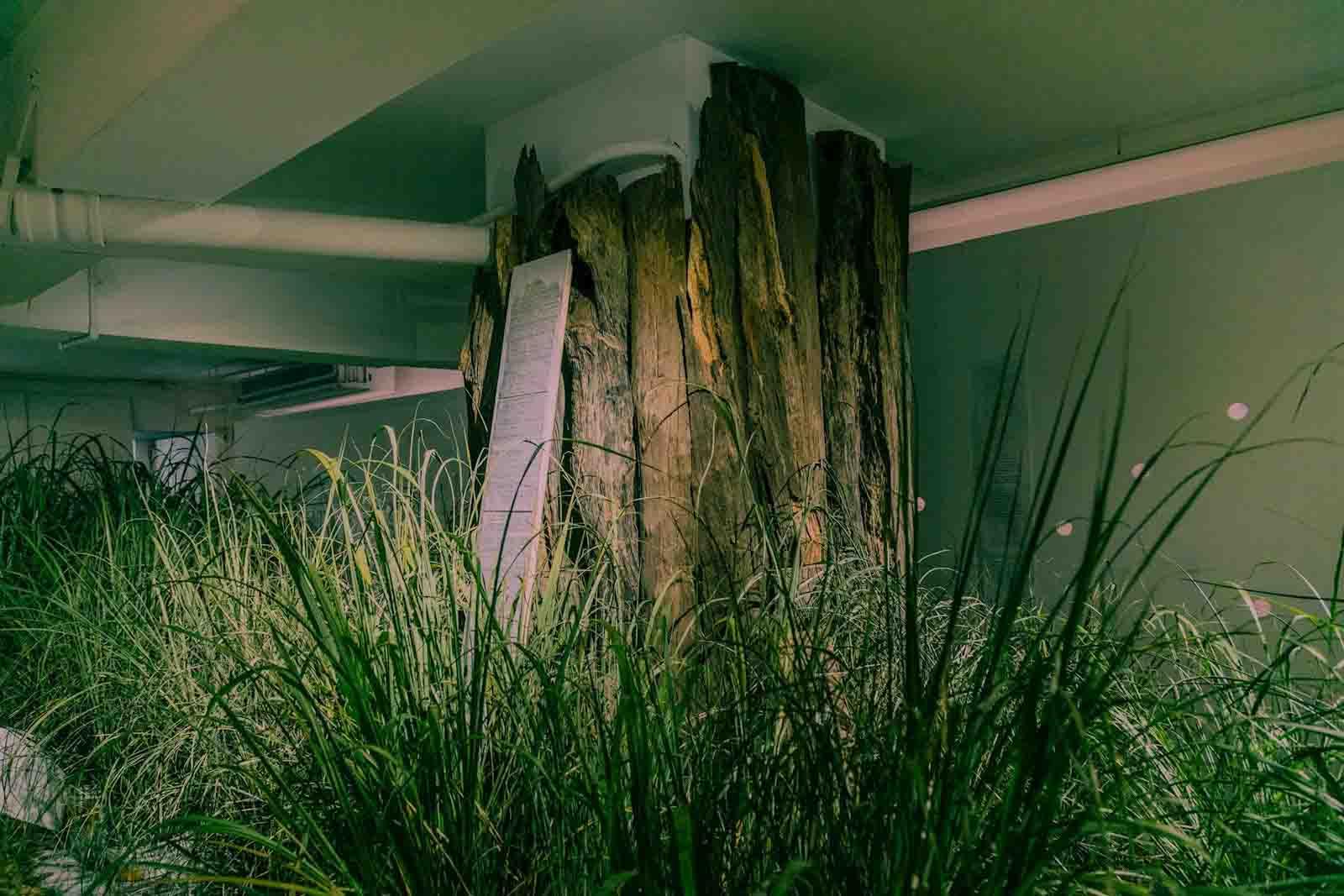 【「38號樹洞」信件展| 0326-0415】